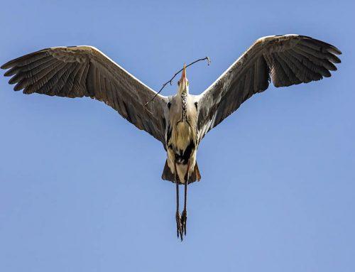 Aves Del Parque Gülhane